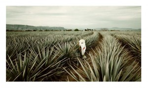 tequila tour, Dreaming of Mexico